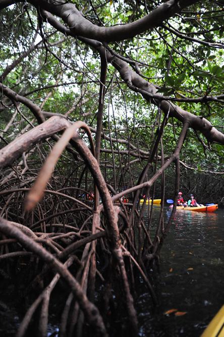 Eco-Kayaking-Ocean--1