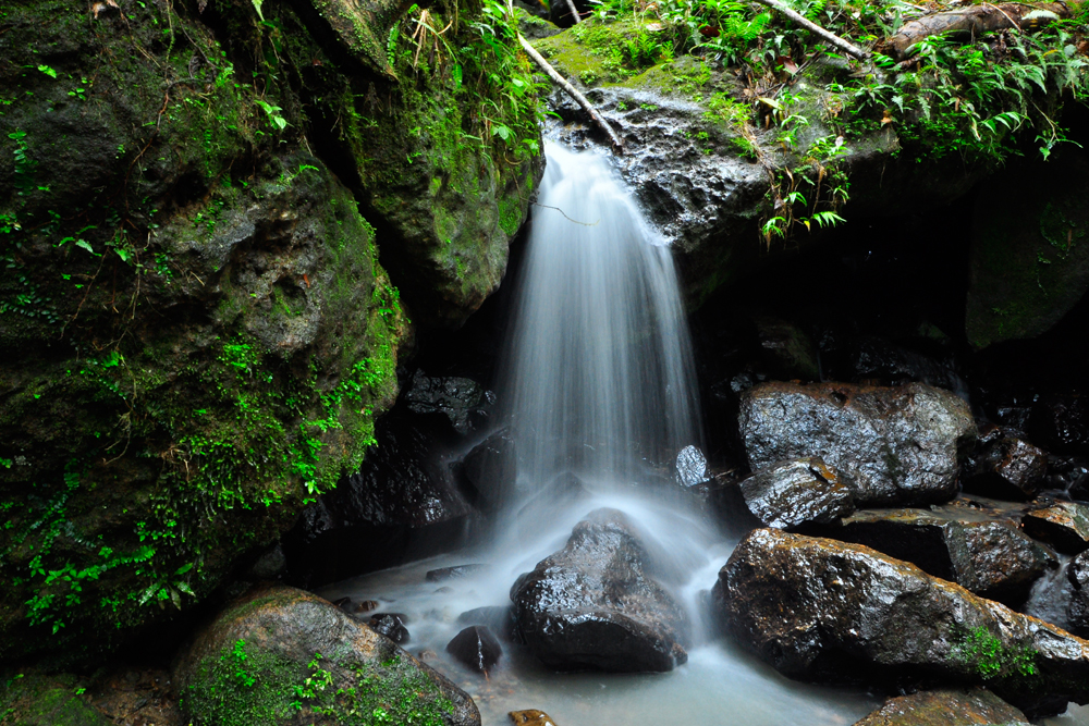 El-Yunque-National-Rainfore-2